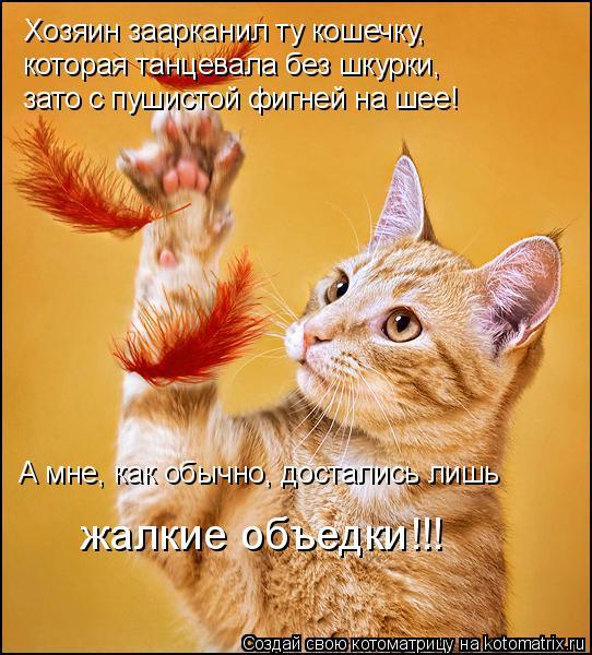 Котоматрица: Хозяин заарканил ту кошечку,  которая танцевала без шкурки,  зато с пушистой фигней на шее! А мне, как обычно, достались лишь  жалкие объедки!!