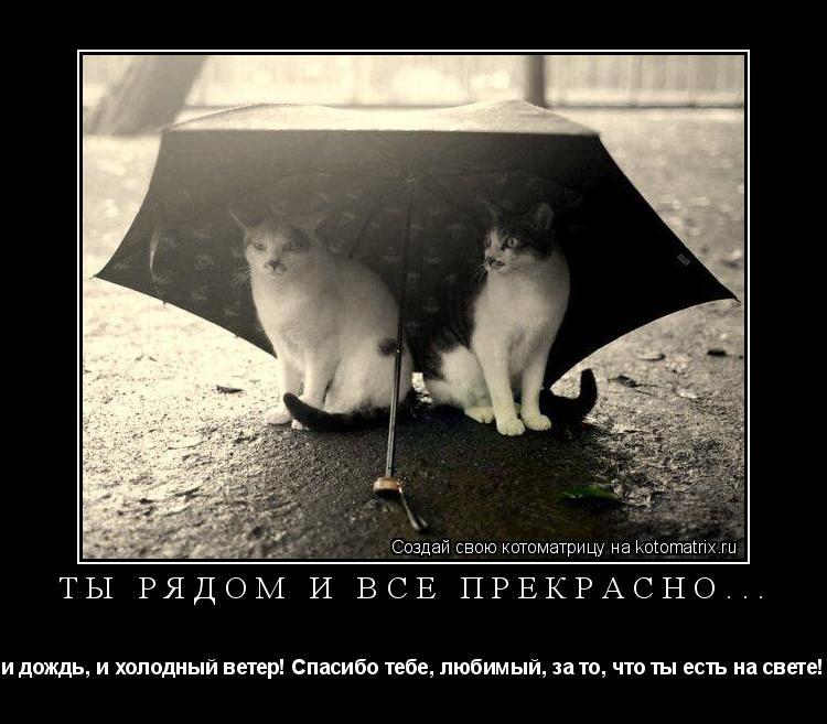 Котоматрица: Ты рядом и всё прекрасно... и дождь, и холодный ветер! Спасибо тебе, любимый, за то, что ты есть на свете!