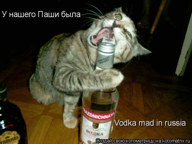 Котоматрица: Vodka mad in russia У нашего Паши была