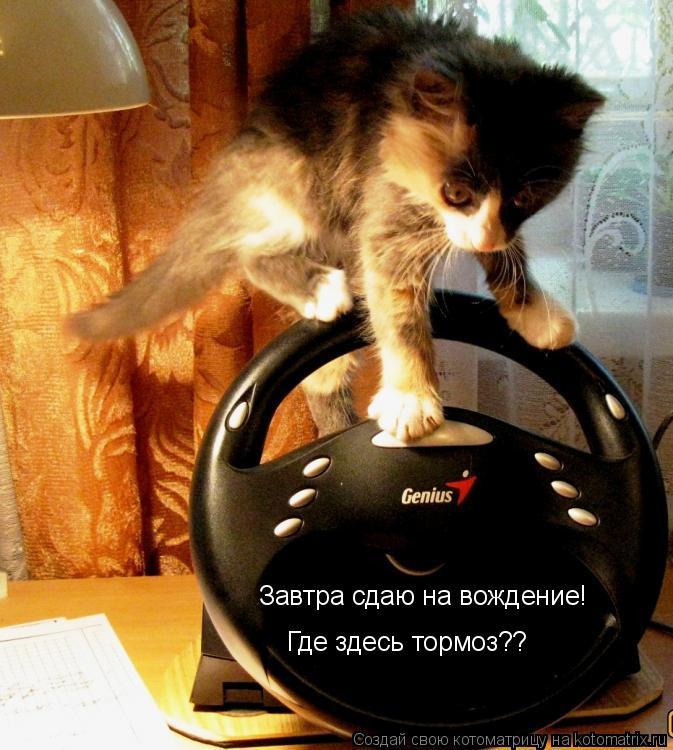 Котоматрица: Завтра сдаю на вождение! Где здесь тормоз??