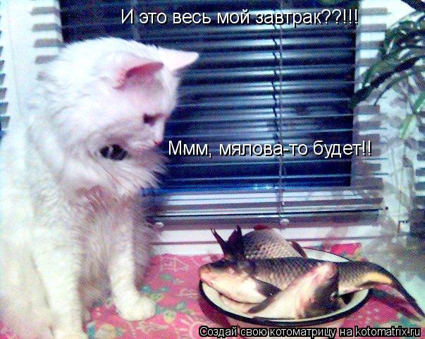 Котоматрица: И это весь мой завтрак??!!! Ммм, мялова-то будет!!