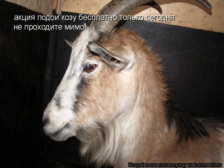 Котоматрица: акция подои козу бесплатно только сегодня  не проходите мимо!