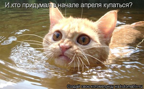 Котоматрица: И кто придумал в начале апреля купаться?