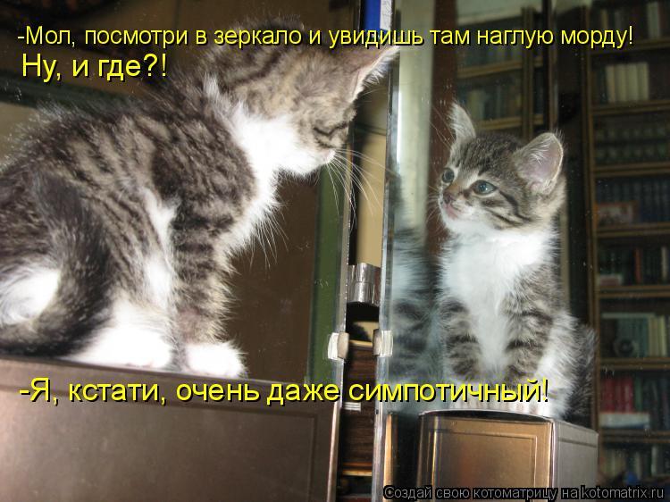 Котоматрица: -Мол, посмотри в зеркало и увидишь там наглую морду! Ну, и где?! -Я, кстати, очень даже симпотичный!