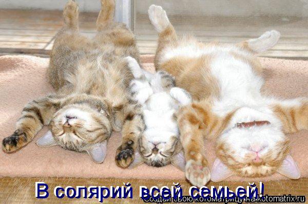 Котоматрица: В солярий всей семьей! В солярий  семьей! всей