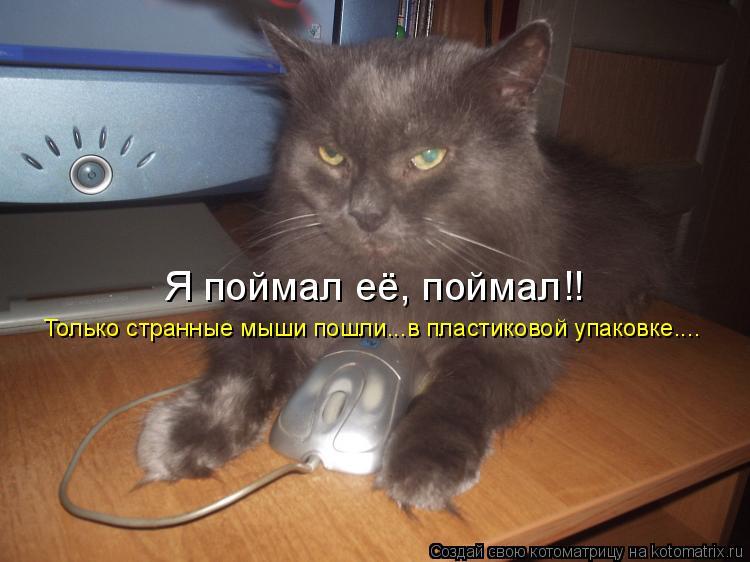 Котоматрица: Только странные мыши пошли...в пластиковой упаковке.... Я поймал её, поймал!!
