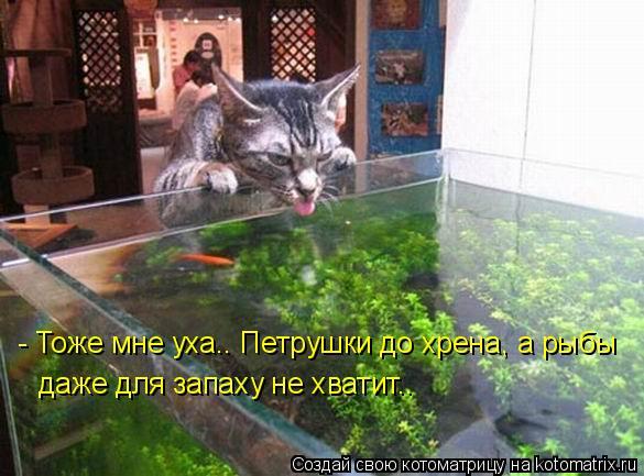 Котоматрица: - Тоже мне уха.. Петрушки до хрена, а рыбы даже для запаху не хватит..