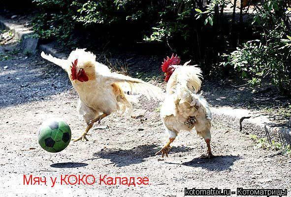 Котоматрица: Мяч у КОКО Каладзе.