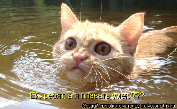 Котоматрица: Ей, ребят, а я плавать умею???