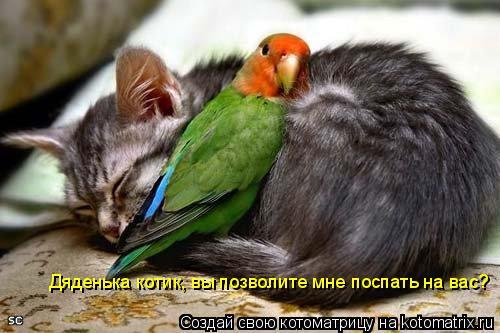 Котоматрица: Дяденька котик, вы позволите мне поспать на вас?