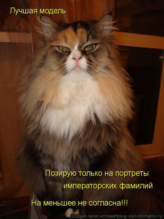 Котоматрица: Лучшая модель  Позирую только на портреты  императорских фамилий На меньшее не согласна!!!