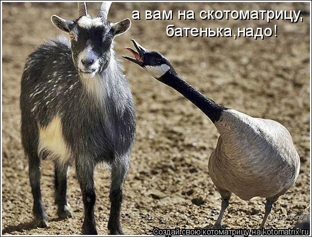 Котоматрица: а вам на скотоматрицу, батенька,надо!
