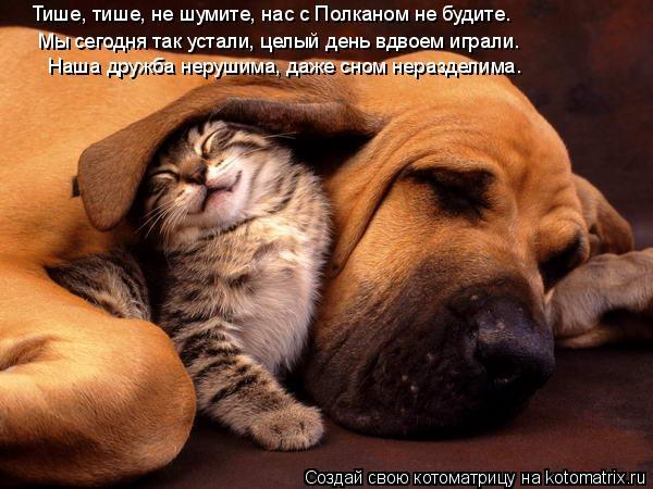 Котоматрица: Тише, тише, не шумите, нас с Полканом не будите. Мы сегодня так устали, целый день вдвоем играли. Наша дружба нерушима, даже сном неразделима.