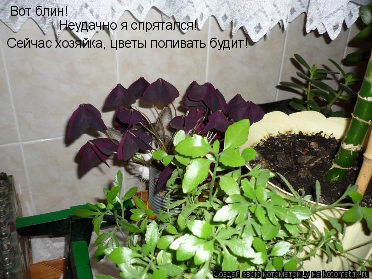 Котоматрица: Вот блин! Неудачно я спрятался! Сейчас хозяйка, цветы поливать будит!