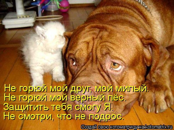 Котоматрица: Не горюй мой друг, мой милый. Не горюй мой верный пёс. Защитить тебя смогу Я. Не смотри, что не подрос…