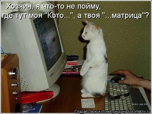 """Котоматрица: Хозяин, я что-то не пойму, где тут моя """"Кото..."""", а твоя """"...матрица""""?"""