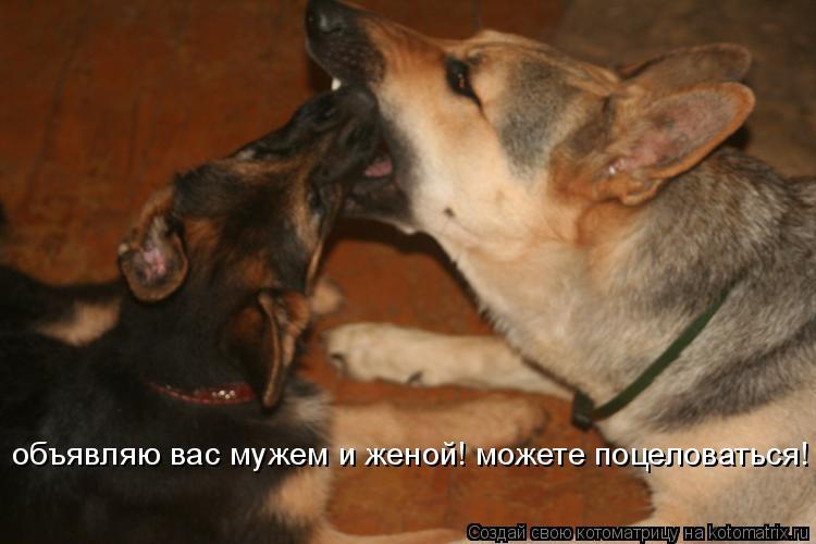 Котоматрица: объявляю вас мужем и женой! можете поцеловаться!