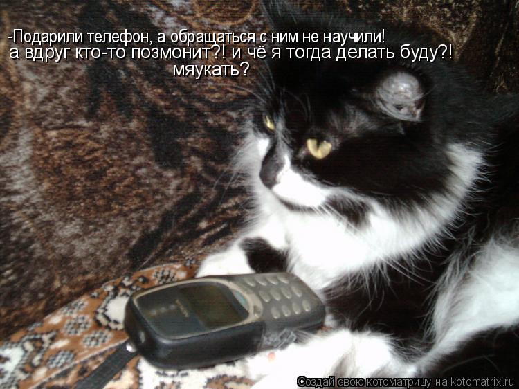 Котоматрица: -Подарили телефон, а обращаться с ним не научили! а вдруг кто-то позмонит?! и чё я тогда делать буду?! мяукать?
