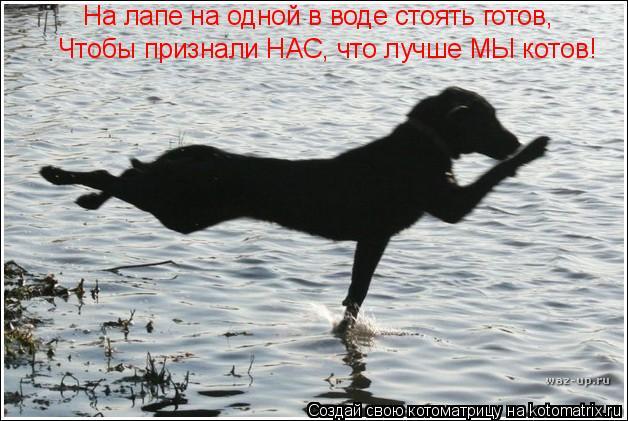 Котоматрица: На лапе на одной в воде стоять готов, Чтобы признали НАС, что лучше МЫ котов!