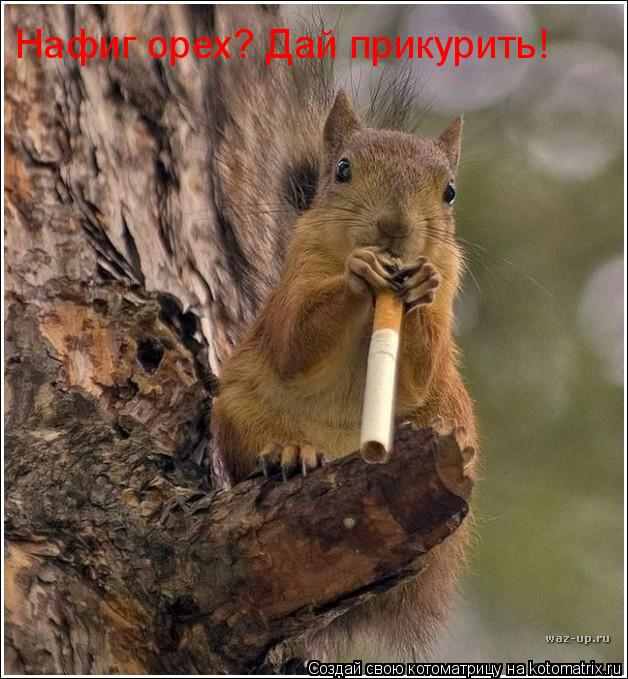 Котоматрица: Нафиг орех? Дай прикурить!