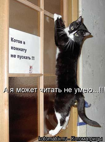 Котоматрица: А я может читать не умею...!!!