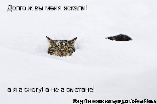 Котоматрица: Долго ж вы меня искали!  а я в снегу! а не в сметане!