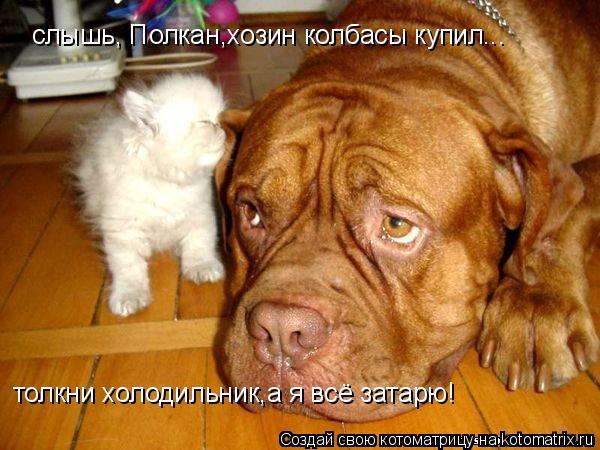 Котоматрица: слышь, Полкан,хозин колбасы купил... толкни холодильник,а я всё затарю!