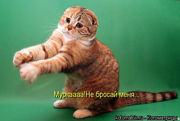 Котоматрица: Муркаааа!Не бросай меня...
