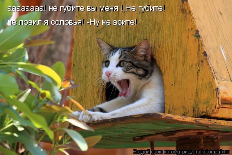 Котоматрица: аааааааа! не губите вы меня !,Не губите! не ловил я соловья! -Ну не врите!