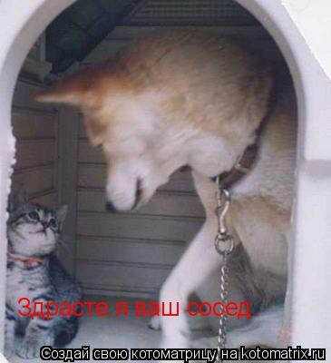 Котоматрица: Здрасте я ваш сосед