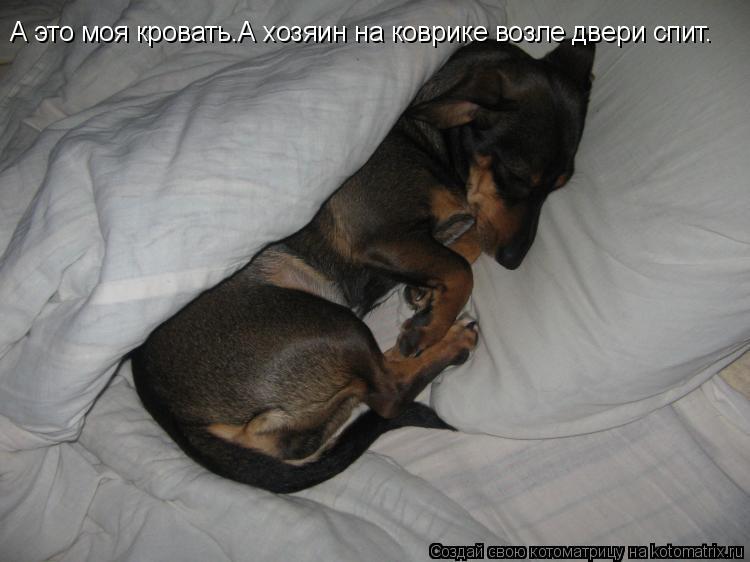 Котоматрица: А это моя кровать.А хозяин на коврике возле двери спит.