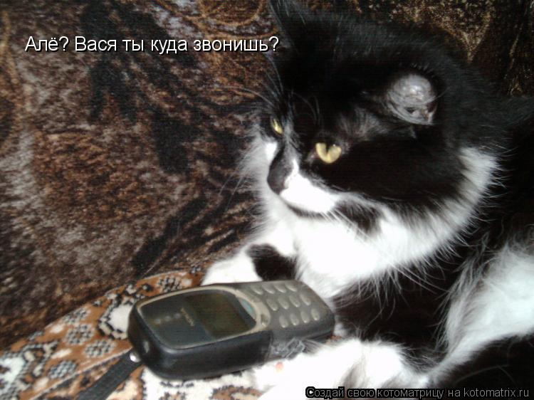 Котоматрица: Алё? Вася ты куда звонишь?