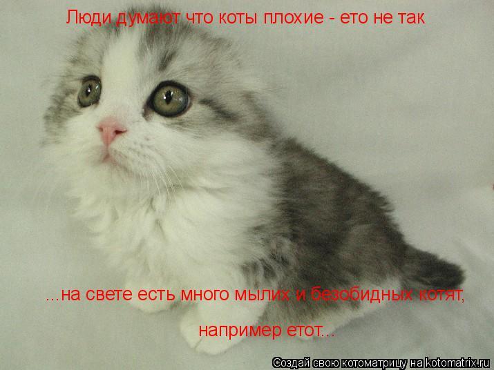Котоматрица: Люди думают что коты плохие - ето не так ...на свете есть много мылих и безобидных котят, например етот...
