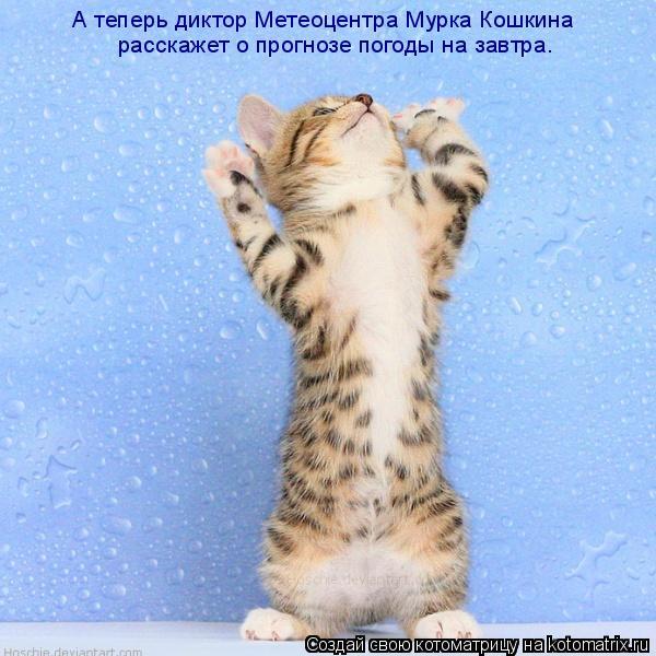 Котоматрица: А теперь диктор Метеоцентра Мурка Кошкина  расскажет о прогнозе погоды на завтра.