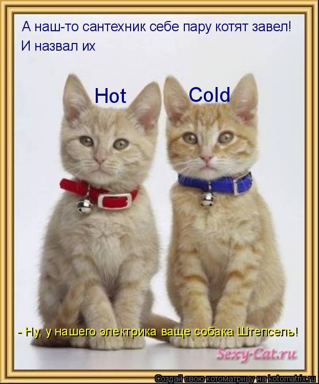 Котоматрица: А наш-то сантехник себе пару котят завел! И назвал их Cold Hot       - Ну, у нашего электрика ваще собака Штепсель!