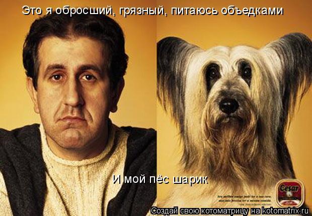Котоматрица: И мой пёс шарик  Это я обросший, грязный, питаюсь объедками