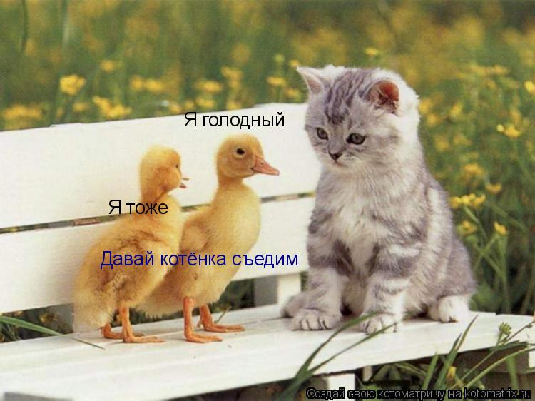Котоматрица: Я голодный  Я тоже Давай котёнка съедим