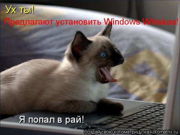 Котоматрица: Ух ты! Предлагают установить Windows Whiskas! Я попал в рай!