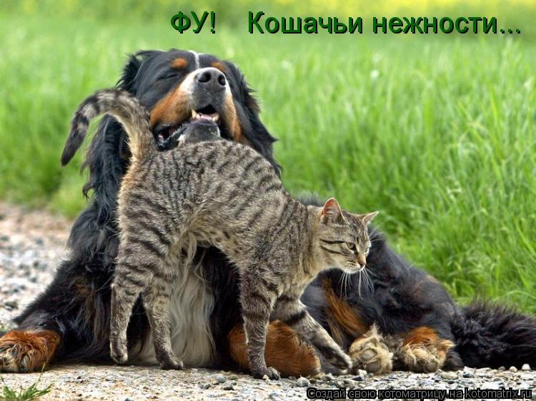 Котоматрица: ФУ!    Кошачьи нежности...