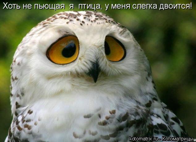 Котоматрица: Хоть не пьющая  я  птица, у меня слегка двоится!