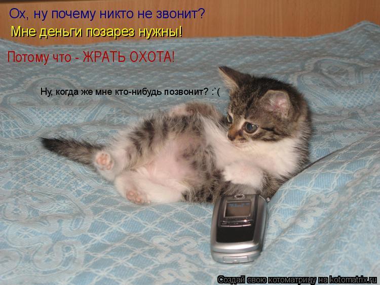 Котоматрица: Ох, ну почему никто не звонит? Мне деньги позарез нужны! Ну, когда же мне кто-нибудь позвонит? :`( Потому что - ЖРАТЬ ОХОТА!