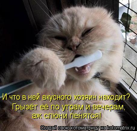 Котоматрица: И что в ней вкусного хозяин находит? Грызёт её по утрам и вечерам, аж слюни пенятся!