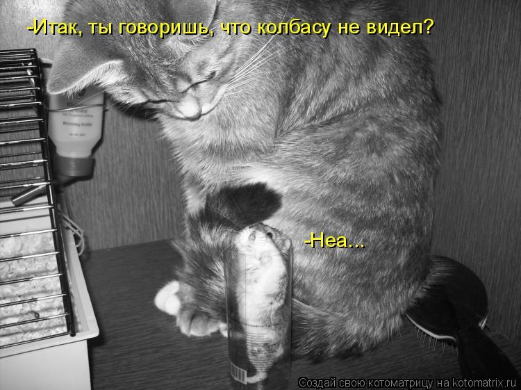 Котоматрица: -Итак, ты говоришь, что колбасу не видел? -Неа...