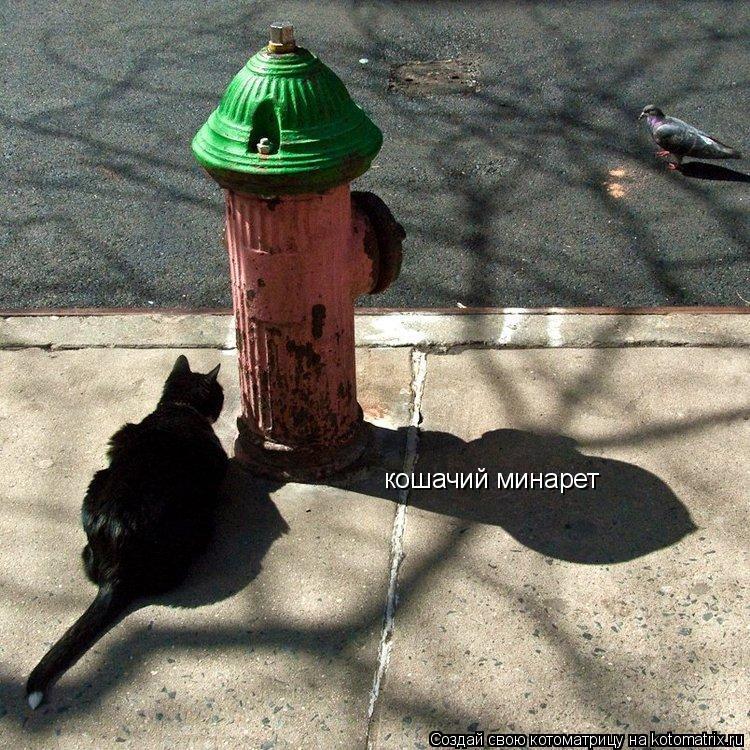 Котоматрица: кошачий минарет