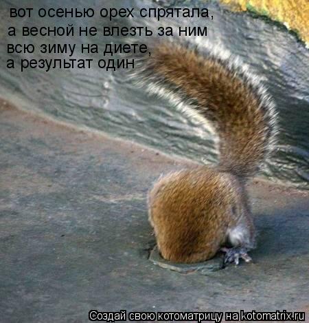 Котоматрица: вот осенью орех спрятала, а весной не влезть за ним всю зиму на диете , а результат один