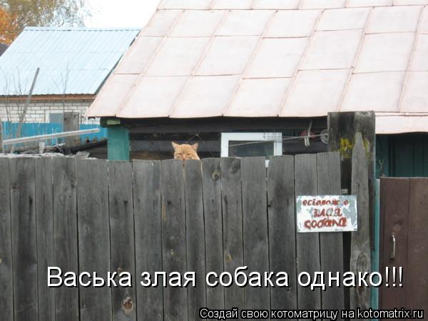 Котоматрица: Васька злая собака однако!!!