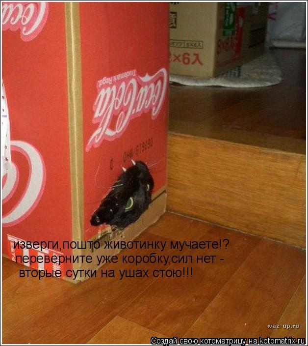 Котоматрица: изверги,пошто животинку мучаете!? переверните уже коробку,сил нет - вторые сутки на ушах стою!!!