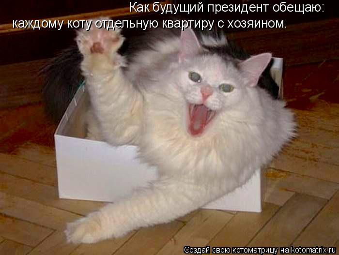 Котоматрица: Как будущий президент обещаю:  каждому коту отдельную квартиру с хозяином.