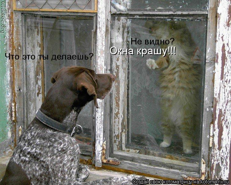 Котоматрица: Что это ты делаешь? Не видно? Окна крашу!!!
