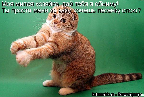 Котоматрица: Моя милая хозяйка, дай тебя я обниму! Ты прости меня за вазу, хочешь песенку спою?